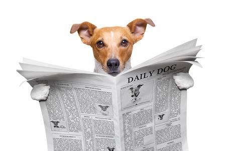 Musetto - dárkové bedny pro psy a kočky - newsletter