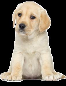 Musetto - dárkové bedny pro psy a kočky